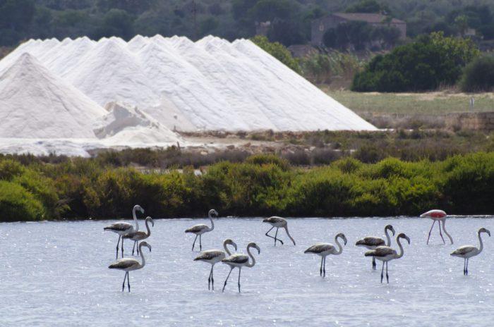 Flamencos en el Parque Natural de Ses Salines